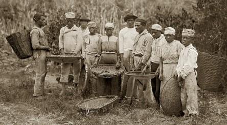 https://gatasnegrasbrasileiras.files.wordpress.com/2013/11/escravos-na-colheita-do-cafc3a9-rio-de-janeiro-rj-c-1882.jpg?w=444