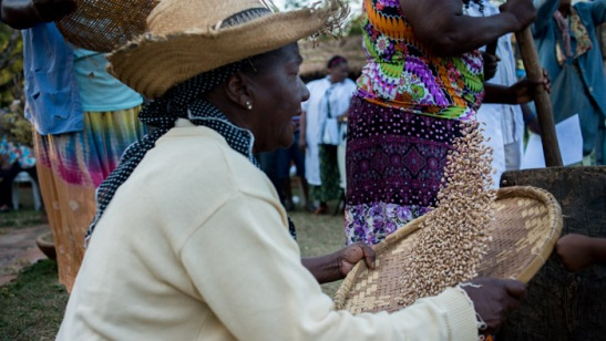 Mulheres celebram os primeiros frutos da estação. Foto - Daniela Paoliello